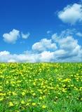 весна ландшафта Стоковые Изображения