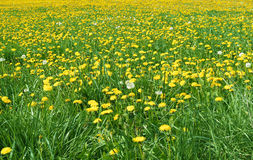 весна ландшафта Стоковые Фотографии RF