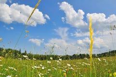 весна ландшафта Стоковое фото RF
