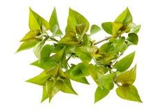 весна листва совершенная стоковые изображения rf