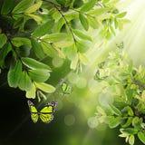 весна листьев бабочки предпосылки Стоковые Фотографии RF