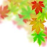 весна листьев граници осени свежая Стоковое фото RF