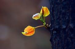 весна листьев новая Стоковые Изображения
