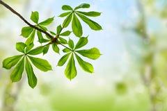 весна листьев предпосылки зеленая Стоковые Фотографии RF