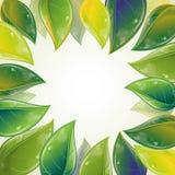 весна листьев рамки Стоковые Фотографии RF