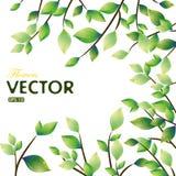 весна листьев рамки Стоковые Фото