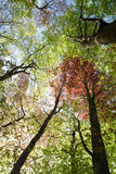 весна листьев Стоковая Фотография RF