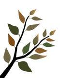 весна листьев Стоковые Фотографии RF