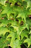 весна листьев Стоковые Изображения