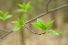 весна листьев Стоковые Изображения RF