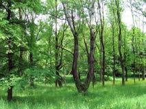 весна лужайки Стоковая Фотография RF