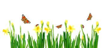 весна лужка Стоковая Фотография