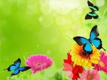 весна лужка стоковое изображение