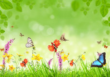 весна лужка стоковая фотография rf