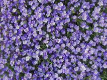 весна лужка Стоковые Изображения RF