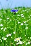 весна лужка Стоковые Изображения