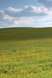 весна лужка Стоковое Изображение RF