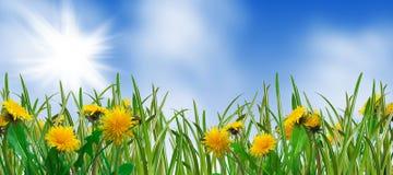 весна лужка Стоковое фото RF