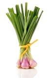 весна лука Стоковая Фотография RF