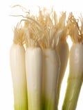 весна луков Стоковое фото RF