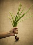 весна луков Стоковые Изображения