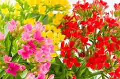 весна макроса Стоковая Фотография RF