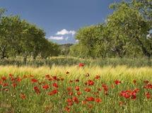 весна места Стоковая Фотография RF