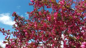 Весна Мичигана Стоковое Изображение