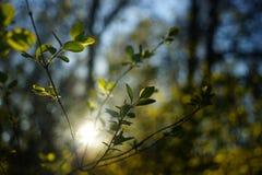 Весна начинала Стоковая Фотография RF