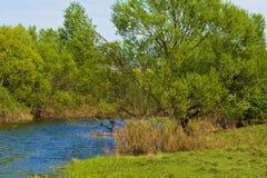 Весна на банках The Creek Стоковые Фотографии RF