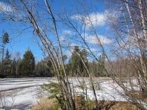 Весна на реке в лесе стоковые изображения rf