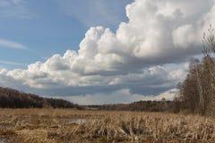 Весна на реке Стоковые Изображения