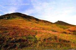 Весна на Derwent валит Стоковое Фото