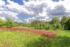 весна неба цветка поля облаков Стоковые Фото