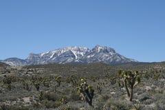 весна Невады гор Стоковое фото RF