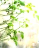 весна нерезкости предпосылки Стоковое Изображение RF
