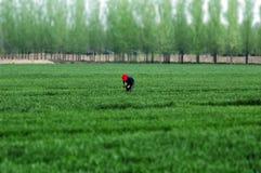 весна нивы стоковое фото