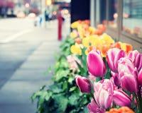 Весна Нью-Йорка стоковое фото rf