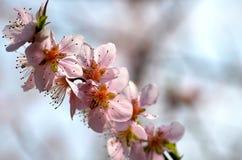 весна доброго утра Стоковое Фото