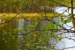 весна озера Стоковое Изображение RF
