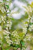 весна орнамента Стоковая Фотография
