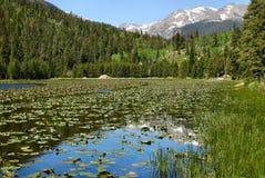 весна отражений озера новичка Стоковое Фото