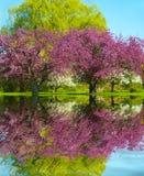 весна отражения Стоковая Фотография