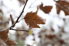 весна падения Стоковые Фотографии RF