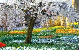 весна парка питомника keukenhof Голландии цветка Стоковая Фотография RF