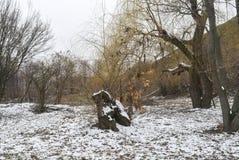 весна парка питомника keukenhof Голландии цветка Стоковое Фото