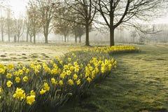 весна парка питомника keukenhof Голландии цветка стоковое изображение rf