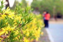 Весна, парк, отдых. стоковые изображения rf