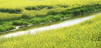 весна пейзажа Стоковые Фото