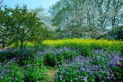 Весна, пейзаж парка вишни Стоковая Фотография RF